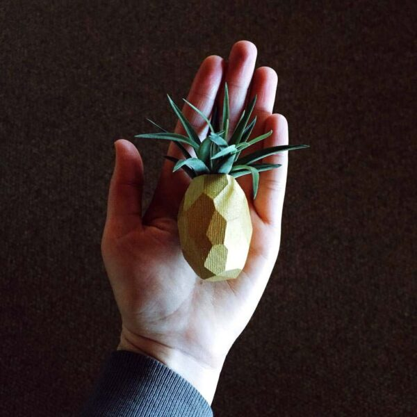 Air Plants with Pineapple Magnet Holder - Gold